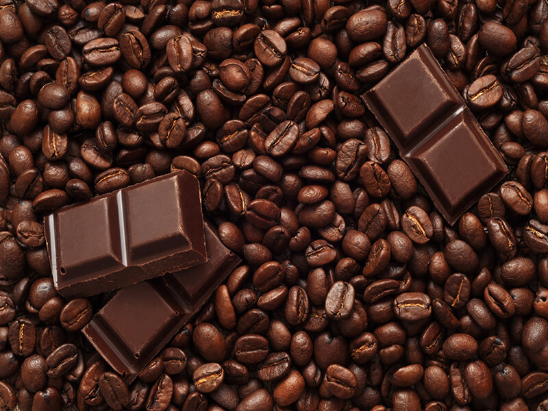 Bean to Bar The Chocolate Story