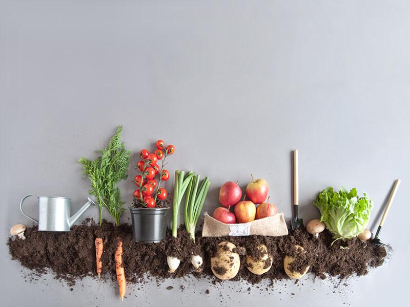 Trending Now Organic Foods