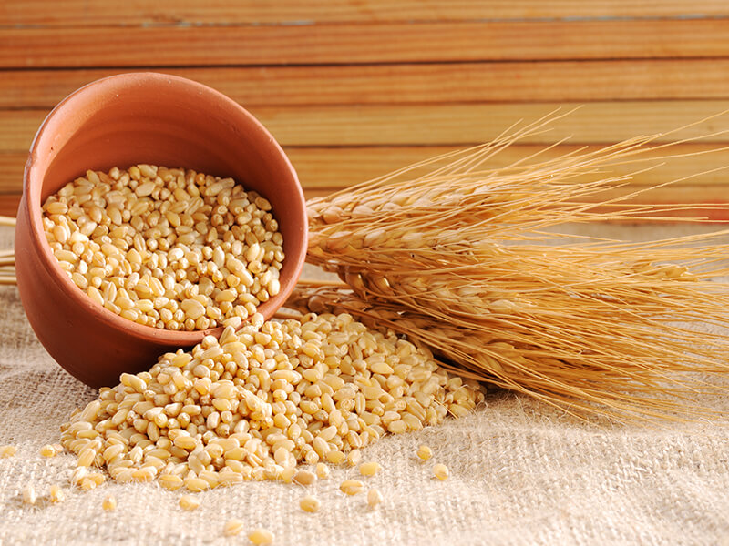 wheat ears and wheat kernels
